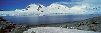 Panoramic view of Chinstrap penguin among rock formations