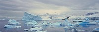Panoramic view of glaciers and icebergs