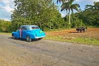 Old turquoise car opens door in front of an Oxen and man plowing field in the Valle de Viñales, in central Cuba