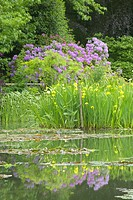 The Gardens at Giverny with reflections of flowers in pond