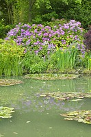 The Gardens at Giverny with Monet's Bridge and waterlillies