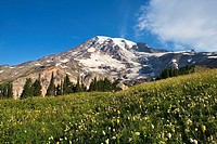 Mt. Rainier National Park. Washington, USA