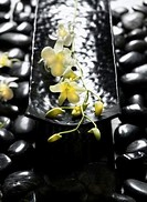 Black Stones and Plumeria
