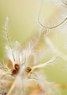 Flower stamen, extreme close-up