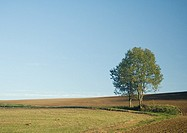Trees surrounded by plowed field