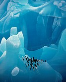 CHINSTRAP PENGUINS Pygoscelis antarctica on blue iceberg made of ancient compressed ice very rare Antarctica