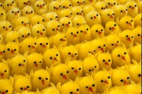 Tightly packed rows of fake fluffy yellow Easter chick decorations