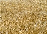 Seed field
