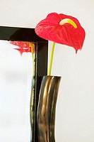 Anthurium in vase by frame, close-up