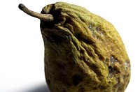 Close-up of a rotten pear