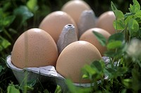 Close-up of six eggs in an egg carton