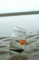 Two fish in a jar on the beach