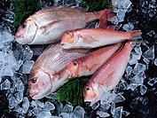 Red Sea Bream and Tilefish