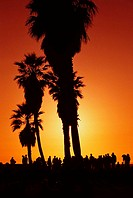 mood back light beach california evening twilight group people bright train nature play nature palm red silhouette sunset tourist tree USA venice Suns...