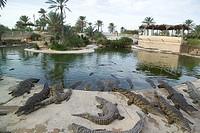 tunisia, djerba, crocodile park