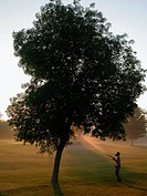 Foliar spray application to ash tree, for control of emerald ash borer