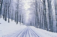 Italy, Abruzzo National Park, Road in Winter