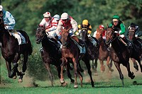Lifestyle, Sport & recreation, Horse racing,