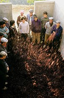 Vintage. Grape harvest. Treading the grapes in lagares (winepress). Douro vineyards. The river Douro valley. Port wine (Vinho do Porto). Portugal