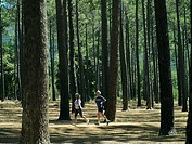 Senior couple in sportswear jogging through woodland, side view
