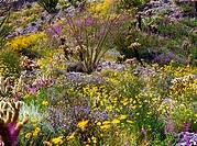 USA, California, Anza Borrego Desert State Park