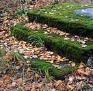 Steps covered with moss