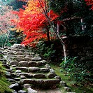 Japan, Shiga Prefecture, Kohra, Saimyo-Ji Temple stairs