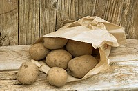 Seed Potatoes, variety, 'Coleen' in garden potting shed setting