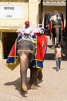 India, Rajasthan, Jaipur, elephant rides at Amber Fort