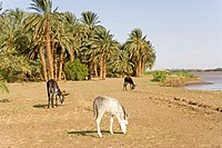 Sudan, Eastern Sahara, Sesebi, the Nile side