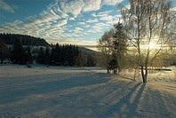 National Park Bayerischer Wald. Sky with clouds. Snow covered landscape. Traces of hare, birch in hoar frost, pine forest, middle range mountains, Ger...