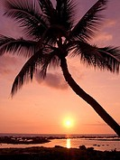 Hawaii, Palm tree silhouette with pink sky over ocean at sunset (thumbnail)