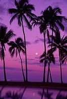Palm trees with moon in a bright pink and purple sky, reflecting on still water