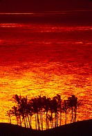 Group of palm trees clustered by ocean, silhouetted by fiery red and yellow reflection of sunset on the ocean