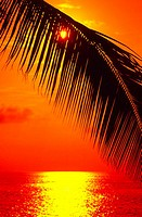 Sun shining through silhouetted palm frond in red sunset sky, red and yellow ocean