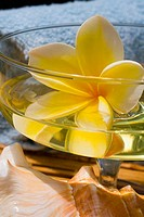 Spa elements, glass with yellow plumeria floating in liquid, with seashell and towel