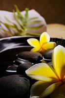 Spa elements, Stones in water in a black bowl with plumeria flowers, towel and green leaf in background