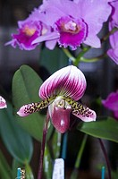 Orchids among green leaves (thumbnail)