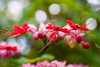 Close-up of bright pink flowers in amongst green blur of plants (thumbnail)