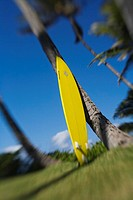 Bright yellow surfboard leaning against a palm tree