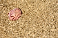 Flat half of pink scallop shell on sand in the upper left corner