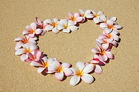 Pink and white plumeria blossoms arranged in heart on sand