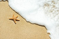 Orange seastar on sand with seafoam washing in