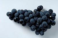 Grapes, ´Regent´, Vitis, vinifera,