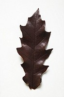 A chocolate leaf