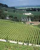 Wine Chateau and vineyards in Bordeaux, France