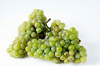 Green grapes, variety Riesling