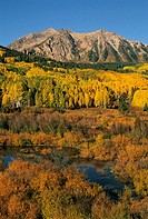 Golden aspens march up the slopes of Marcelina Mountain on a cool autumn morning near Crested Butte, Colorado, USA