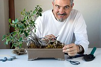 Working in Bonsai (Ficus Retusa).
