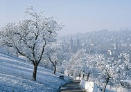 town, city, St. Gallen, winter, overview, Old Town, snow, way, trees, Switzerland, Europe,
